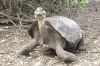 Animalele din Galapagos sunt amenintate