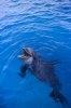 Delfinii salveaza patru oameni