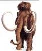 Un mamut a fost descoperit in Florida
