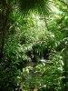 Specii noi, descoperite in padurea tropicala