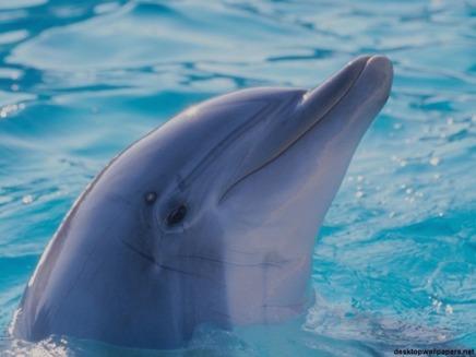Noua Zeelanda interzice pescuitul delfinilor