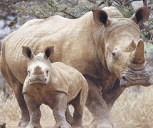 Un rinocer alb s-a nascut la gradina zoologica din Dublin
