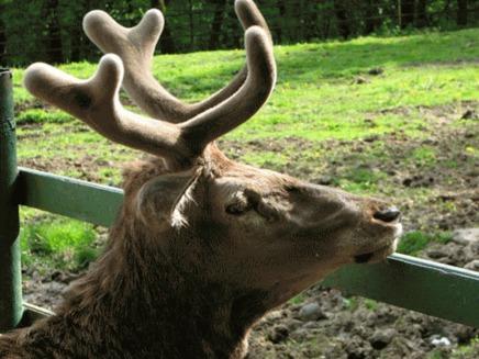 Zoo Targu Mures, aliniata la standardele UE