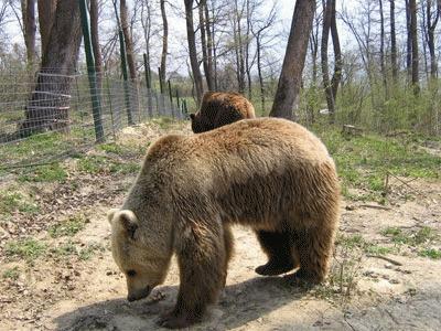 Ursul Max, vedeta Animal Planet