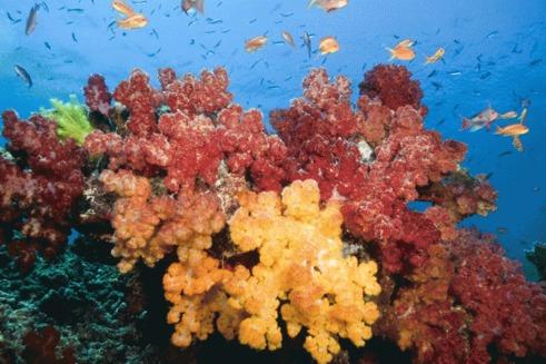Descoperire uimitoare a 300 de specii marine noi