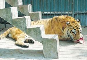 Gradina zoologica de la Tecuci, obligata sa isi inchida portile