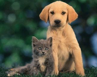 Cainii de talie mica si pisicile, animalele preferate de barbatii delicati