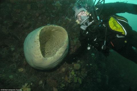 Primul inventar al vietii de la Polul Sud - 1224 de specii de animale