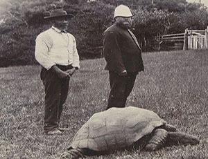 O testoasa de 176 de ani este cel mai batran animal in viata