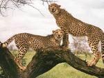 Animale pe cale de disparitie - inca 21 de specii adaugate pe lista