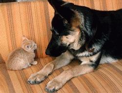 Cainii sunt mai evoluati decat pisicile