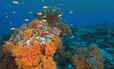 Coralii anunta un tsunami ca cel din 2004 peste 20 de ani