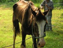Caii de rasa subnutriti de la Homorod, confiscati de autoritatile brasovene