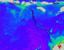 Testoasa Ana ne dezvaluie super-autostrazile oceanice