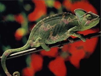 Noi specii de reptile si amfibieni, descoperite in Tanzania