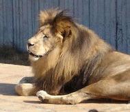 Animalele exotice de la Zoo Sofia se incalzesc la lampi cu ulei