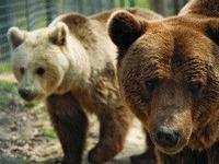 O gradina zoologica de milioane de euro