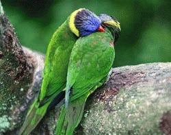 Animale indragostite in premiera la Green Planet Blues