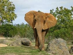 Semirezervatie de elefanti si girafe la Zoo Targu Mures