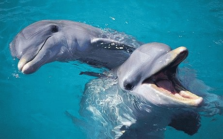 Delfinii stiu sa gateasca