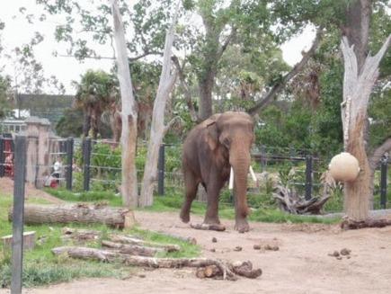 Elefantii de la zoo intra in depresie din cauza singuratatii