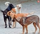 Sterilizarea cainilor, posibila doar in cabinete veterinare autorizate