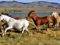 Caii au fost domesticiti cu 1.000 de ani mai devreme decat se credea