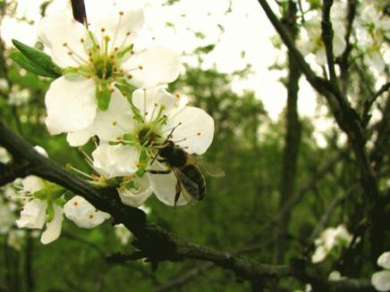 Albinele si furnicile au spirit de echipa