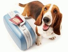 Pet Airways - Prima linie aeriana speciala pentru animale
