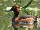 UE finanteaza un proiect de conservare a doua specii de pe Dunare