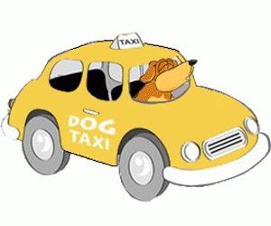 """Dog Taxi - Taxi pentru caini oferit de Asociatia """"Cutu, Cutu"""""""