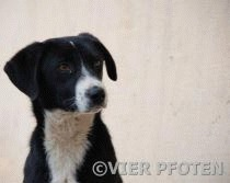 Sterilizarea animalelor fara stapan in Sibiu