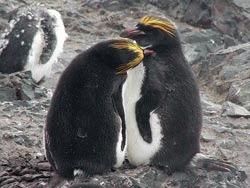 Viata secreta a pinguinilor iese la lumina