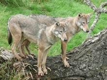 IUCN a lansat ghidul conservarii biodiversitatii din Balcani