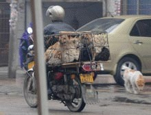 Masacru in China: Omorarea in masa a cainilor fara stapan