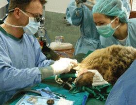 Control veterinar in Parcul Ursilor Dansatori