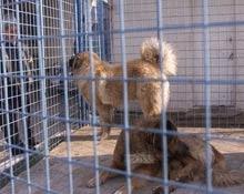 Stapanii de caini nu mai sunt obligati sa-si sterilizeze patrupedele