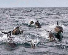 Numar record de delfini in apele Marii Britanii