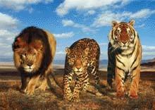 Extinctiile ataca speciile la nivelul intregii familii
