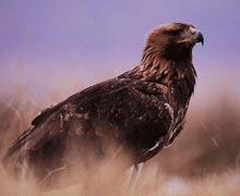 A murit cel mai batran vultur din Marea Britanie