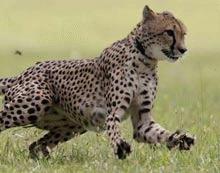 Cel mai rapid animal din lume