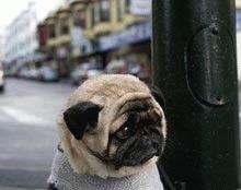 Cel mai trist caine din lume