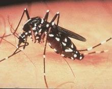 Schimbarile climatice inmultesc bolile