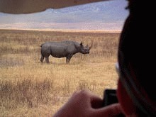 Cornul de rinocer, mai scump decat aurul pe piata neagra