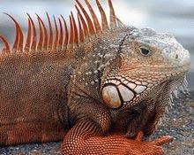 Viata salbatica din Galapagos devastata de incalzirea oceanelor