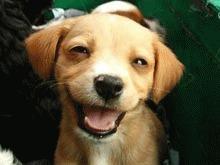 Top 5 victorii pentru drepturile animalelor in 2009