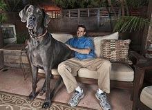 Cel mai mare caine din lume?