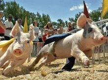 PETA cere interzicerea curselor de porci