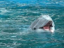 Ecolocatia face ca liliecii si delfinii sa aiba un ADN asemanator