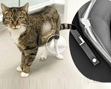 Prima pisica din lume cu proteza de genunchi